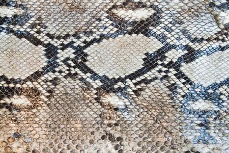 Boa snake skin pattern texture background Standard-Bild