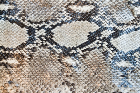 Boa snake skin pattern texture background Stock Photo
