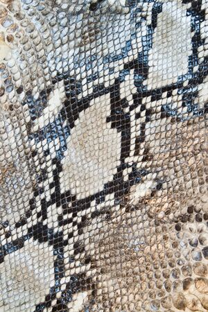reptilian: Boa snake skin pattern texture background Stock Photo