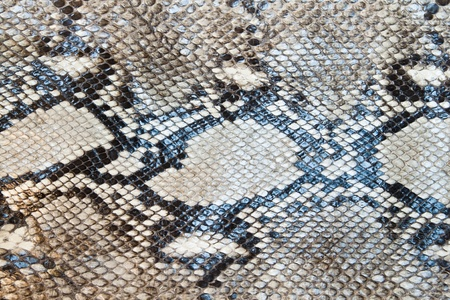 Snake skin pattern texture background Stock Photo
