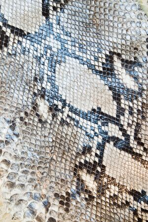 Snake skin pattern texture background photo