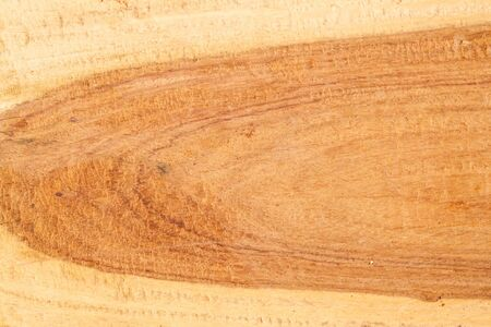 Wood Texture from Tropical Tree photo