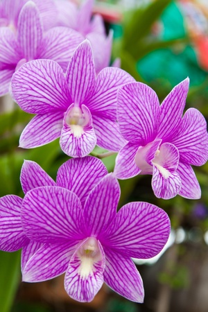 Beautiful purple orchid on green leaf background.