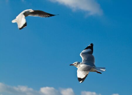 Seagull in blue sky background photo