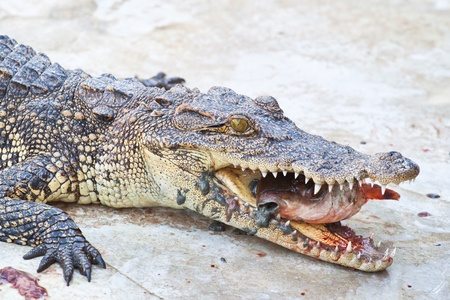 crowd tail: Lunch with Crocodile