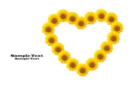 Sunflower isolated  on white background. photo