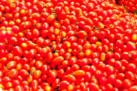 small tomato,Thailand call Queen tomato Stock Photo - 12687005