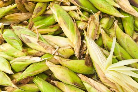 Pile of fresh corn vegetable.  Stock Photo - 14240909