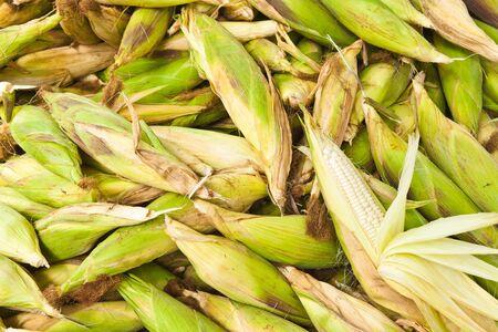 Pile of fresh corn vegetable. Stock Photo - 14240909