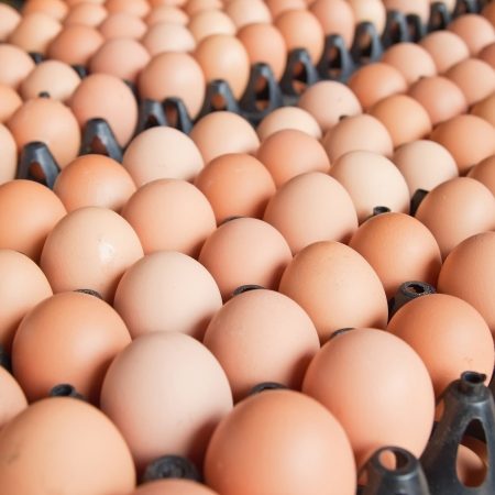 Many brown eggs in boxes. Stock Photo - 17370463