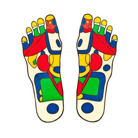 Reflexology foot massage points Stock Photo - 17561640