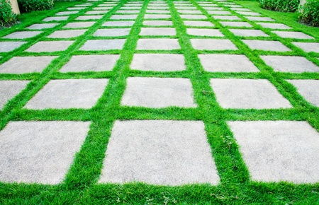 Green grass growth between cement walkway photo