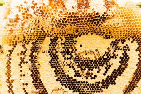 curative: sweet honeycombs with honey