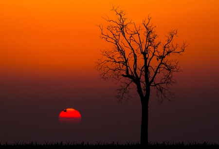 silhouettes of dead tree against sunset background  photo