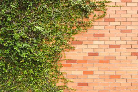 green creeper plant on brick wall photo