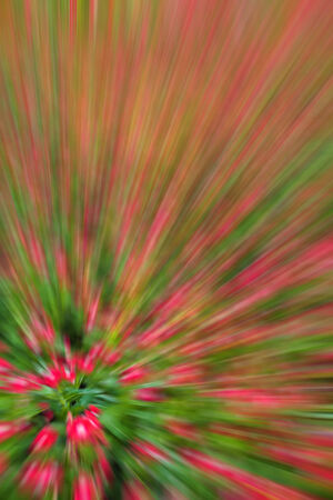 garish: abstract background of planting flower in garden,with blur filter