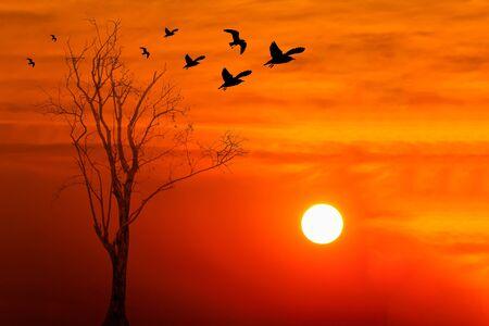 toter baum: Silhouette der V�gel mit toten Baum gegen sch�nen Sonnenaufgang Hintergrund Lizenzfreie Bilder