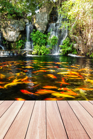 fish water: Koi fish in pond at the garden with a waterfall and wood walkway foreground