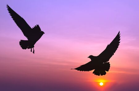 silhouetted: Silhouetted two seagull flying at colorful sunset