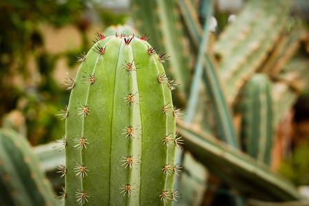 close up: cactus close up Stock Photo