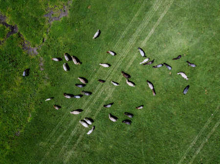 Aerial view of horses on the ranch Stok Fotoğraf