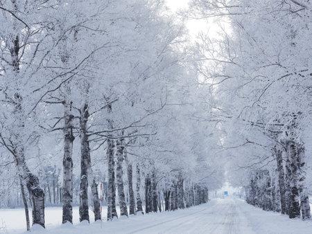 tree lined street in winter
