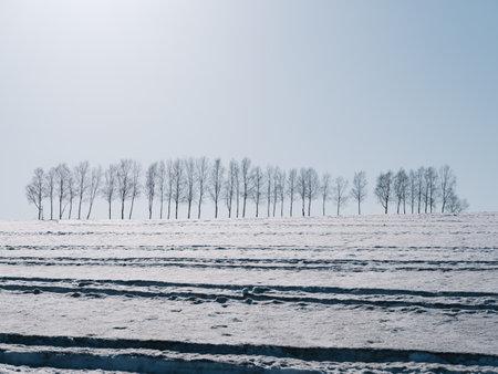 Biei town in winter