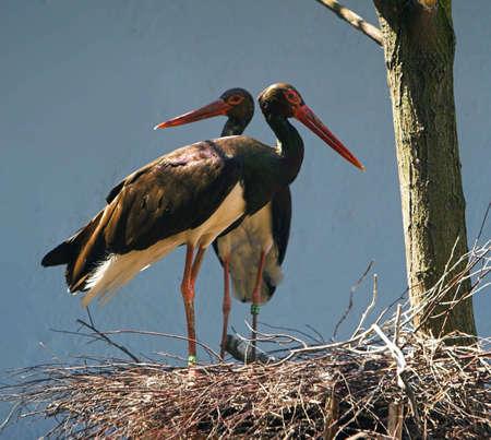 Birds Stock Photo - 292558
