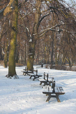 Winter in park photo