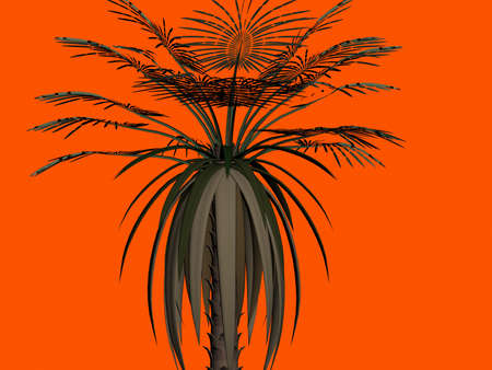 palmtree: Palm-tree