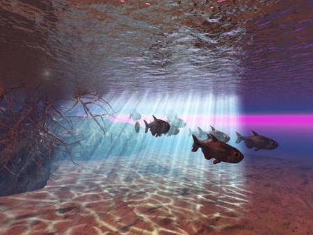 Underwater Stock Photo - 2561144