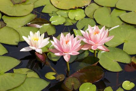 Summer pond Stock Photo - 3542202
