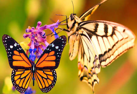 countrysides: Butterfly