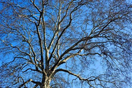 Crow flying Stock Photo - 3549274