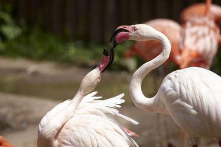 waders: Flamingos Stock Photo