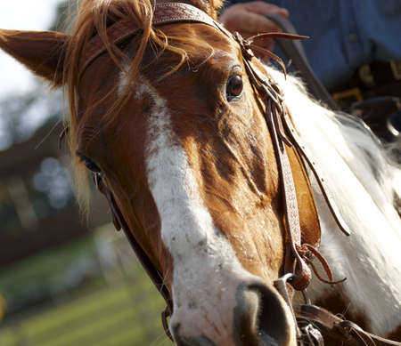 terrestrial mammals: Horses