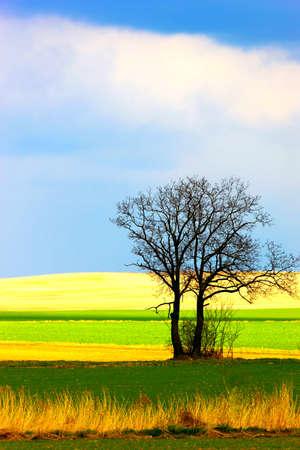 Solitary tree 版權商用圖片
