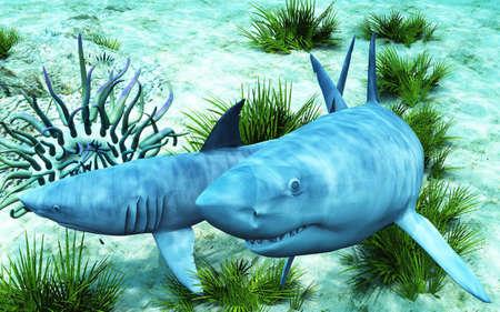 Sharks Stock Photo - 4492036