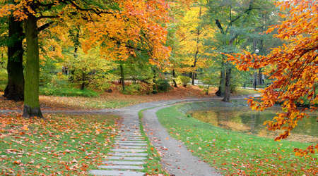 pathway: Park in fall time Stock Photo