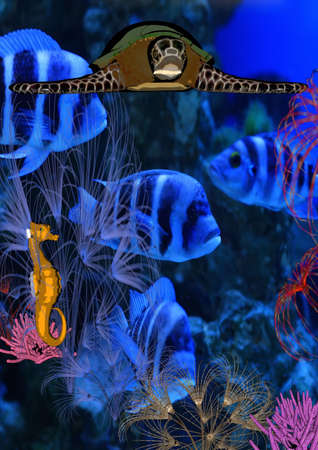 Underwater world Stock Photo - 4491798