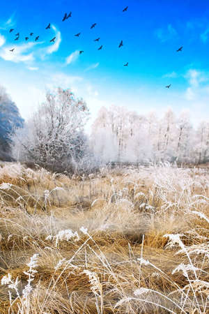 Wintery landscape photo