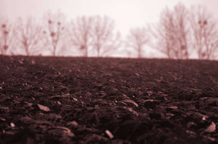 lifeless: Lifeless field Stock Photo