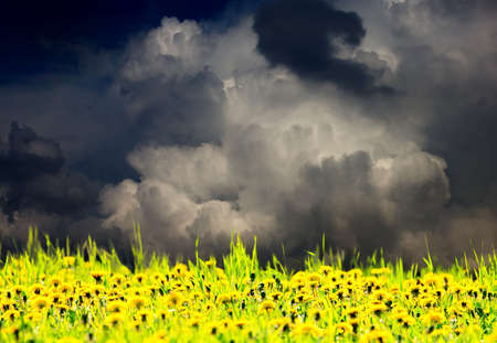 thundercloud: Very dramatic sky over dandelion meadow