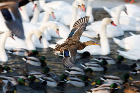 waterbird: waterfowl by the river