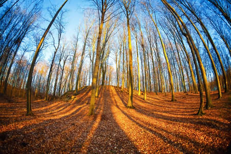 Beech forest Stock Photo - 6976240