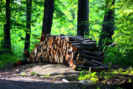 deforested: Logging