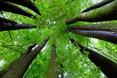 Tree canopy Stock Photo - 7144650