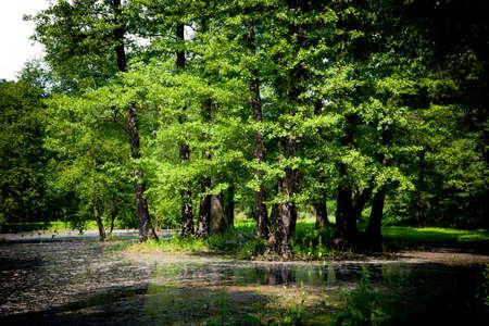 Swamp Stock Photo - 7242655