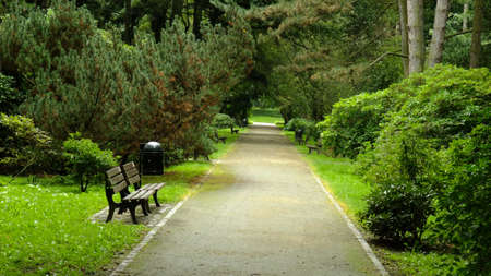 forest path: Park in spring time