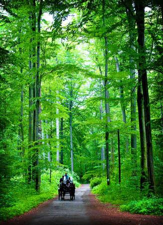 The path through the autumnal park photo